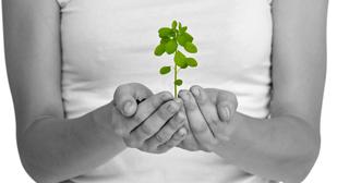 Flourishing.jpg